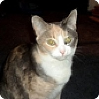 Adopt A Pet :: Precious - Vancouver, BC