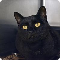 Adopt A Pet :: Forrest - Versailles, KY