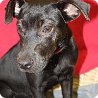 Adopt A Pet :: Bonnie - Waldorf, MD