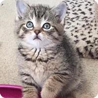 Adopt A Pet :: Zane - Island Park, NY