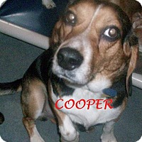 Adopt A Pet :: COOPER - Ventnor City, NJ
