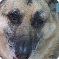 Adopt A Pet :: Jax-Referral - Dripping Springs, TX