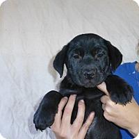 Adopt A Pet :: Rusty - Oviedo, FL