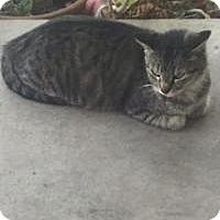 Adopt A Pet :: Tomika Help - Mission Viejo, CA