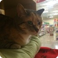 Adopt A Pet :: Tinsel - McHenry, IL