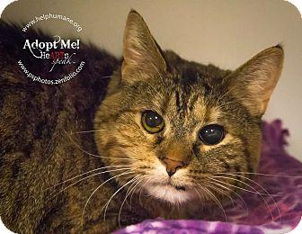 Calico Cat for adoption in Belton, Missouri - Portia