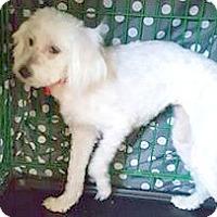 Adopt A Pet :: Suzie-ADOPTION PENDING - Boulder, CO