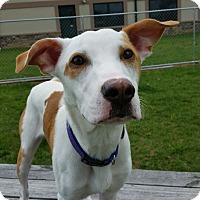 Adopt A Pet :: Spike - Chambersburg, PA