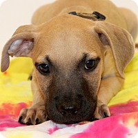 Adopt A Pet :: Dumplin - Glastonbury, CT