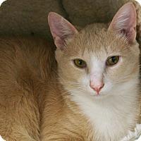 Adopt A Pet :: Benton - Republic, WA