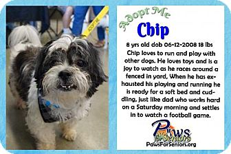 Shih Tzu Dog for adoption in Bealeton, Virginia - Chip