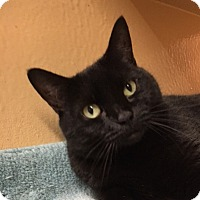 Adopt A Pet :: Kenzie - Fairfax, VA