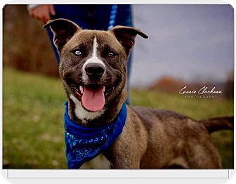 Terrier (Unknown Type, Medium) Mix Dog for adoption in Zanesville, Ohio - Guy - ADOPTED!