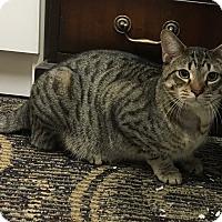 Adopt A Pet :: Frank - Siler City, NC