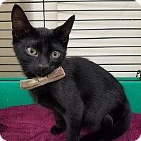 Adopt A Pet :: Nixon - Spring, TX