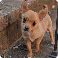 Adopt A Pet :: Clyde - San Antonio, TX
