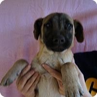 Adopt A Pet :: Keira - Oviedo, FL