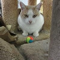 Adopt A Pet :: Pal - Kingston, WA