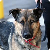 Adopt A Pet :: Shep - Palmdale, CA