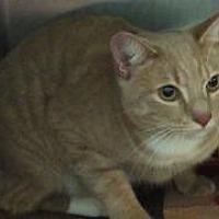 Adopt A Pet :: Punkin - Queenstown, MD