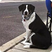Adopt A Pet :: Max - Chalfont, PA