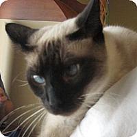 Adopt A Pet :: Sky - Karen - Homestead, FL