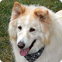 Adopt A Pet :: ODIE-Adoption Pending - Boise, ID