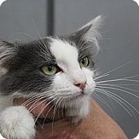 Adopt A Pet :: Dayton - Santa Monica, CA
