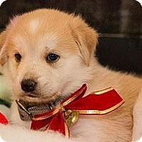 Adopt A Pet :: Norma - Saskatoon, SK
