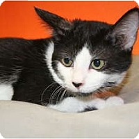 Adopt A Pet :: BONNIE - SILVER SPRING, MD