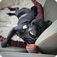 Adopt A Pet :: Marta - Austin, TX