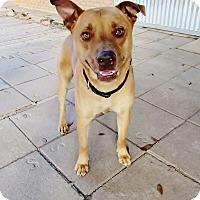 Adopt A Pet :: Bernard - Silsbee, TX