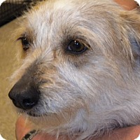 Terrier (Unknown Type, Medium) Mix Dog for adoption in Fresno, California - Gingersnap