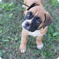 Adopt A Pet :: Khaki - Peachtree City, GA
