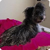 Adopt A Pet :: Ana - Las Vegas, NV