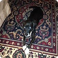 Adopt A Pet :: Smoke & Girlie Girl  -Courtesy - Richmond, VA