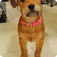 Adopt A Pet :: Venus - Weatherford, TX