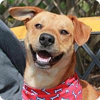 Adopt A Pet :: Vince - Garfield Heights, OH