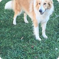 Adopt A Pet :: Josie - New Oxford, PA