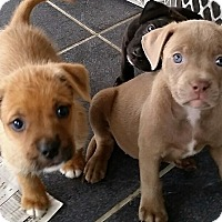 Adopt A Pet :: Eliza - Weeki Wachee, FL