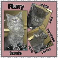 Adopt A Pet :: Flurry - Richmond, CA