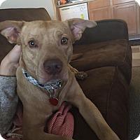 Adopt A Pet :: Sebastian - Southbury, CT