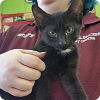Adopt A Pet :: Nikki - Oak Lawn, IL