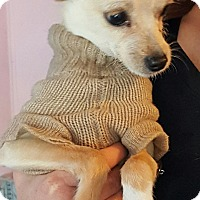 Adopt A Pet :: Spooky - Los Angeles, CA