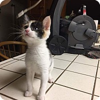 Adopt A Pet :: Pixie - Modesto, CA