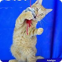 Adopt A Pet :: OJ - Carencro, LA