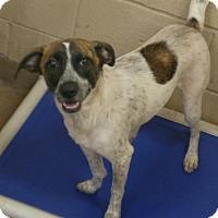 Adopt A Pet :: 1-10 Lady - Triadelphia, WV