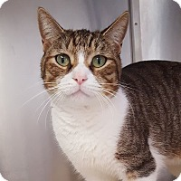 Adopt A Pet :: Oliver - Umatilla, FL