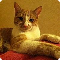 Adopt A Pet :: GRANT - Los Angeles, CA