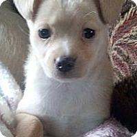 Adopt A Pet :: Bonnie - Costa Mesa, CA